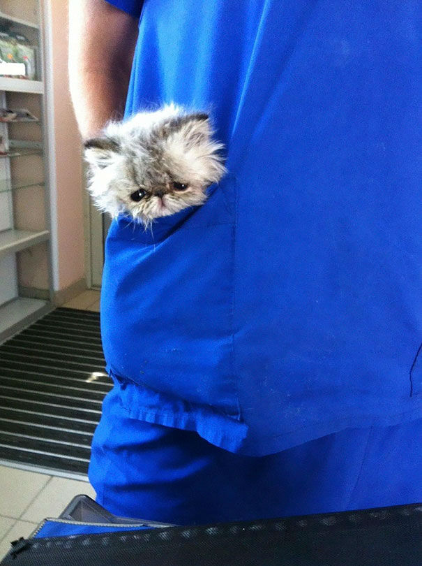 animals-at-vet-clinic37
