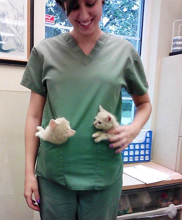 animals-at-vet-clinic45