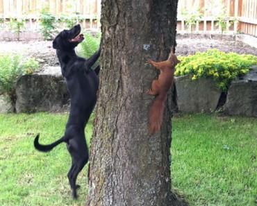 dog chasing squirrel