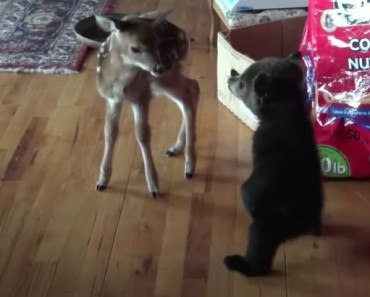 Baby Bear Meets Fawn