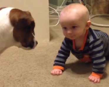 dog-teaches-baby-to-crawl