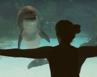 girl makes dolphin laugh