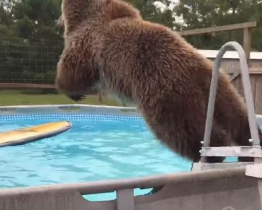 bear-jumps-pool