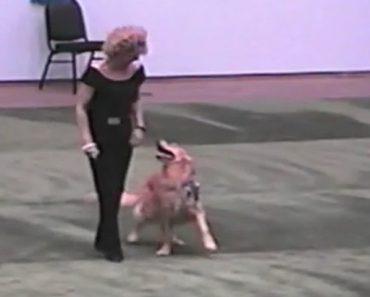 dog-grease-dance