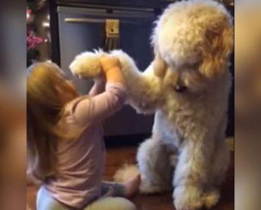 girl-dog-paw