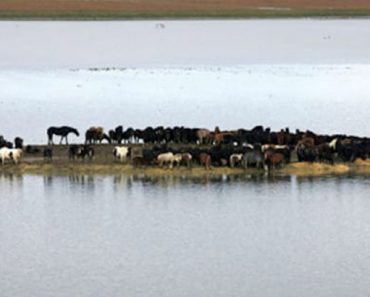 horses-stranded