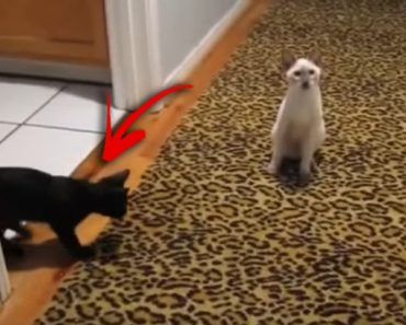 kitten-jumps-around