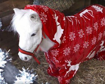 onesie-pony