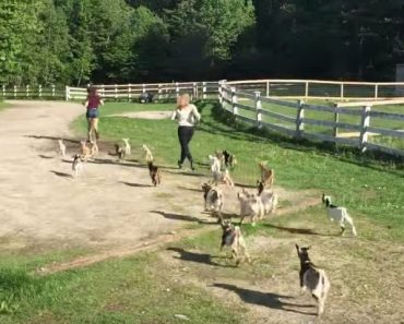 running-of-the-goats