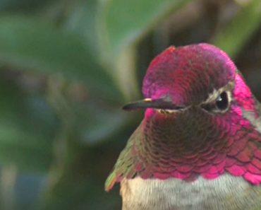 hummingbird feathers