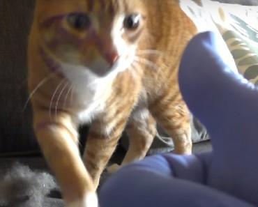 kitty life hacks