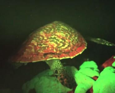 glowing sea turtle