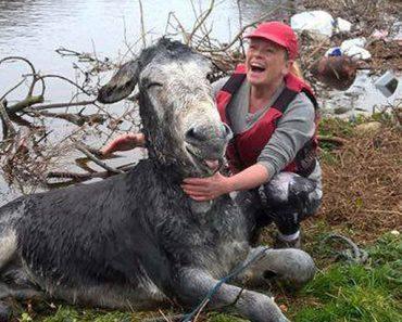 rescued donkey smile